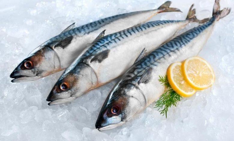 افضل انواع السمك