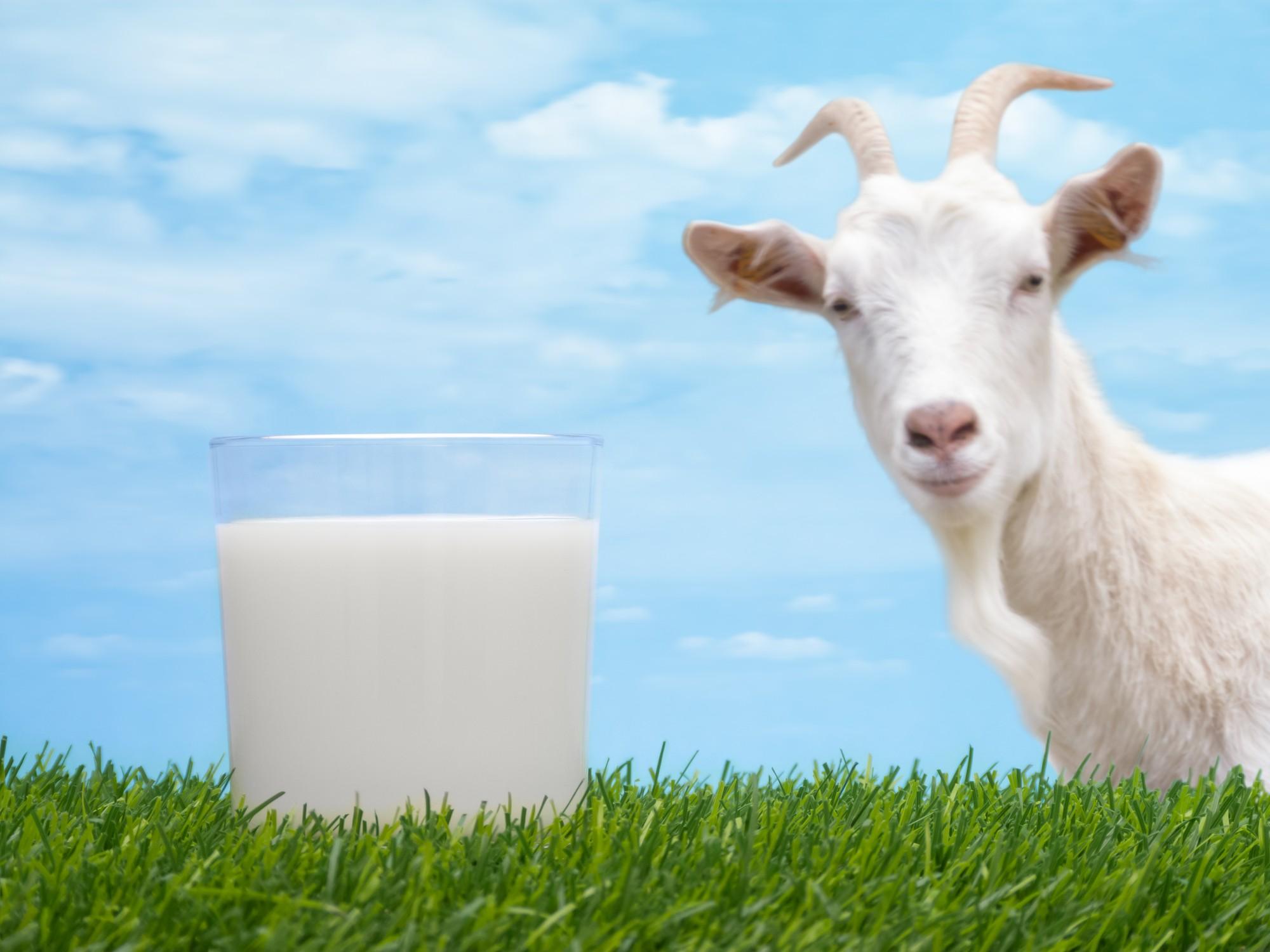 حليب الماعز للرضع
